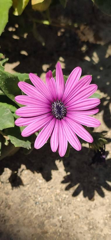 Mylenium69 en Hamelin: Flora  (Alicante), #flora #flor #naturaleza #macrofotografia #natura #macro
