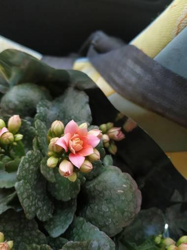 fernandezcande17 en Hamelin: Flora