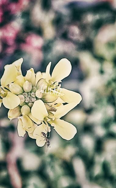 gisca72 en Hamelin: Flora, #miniflor #hormiga