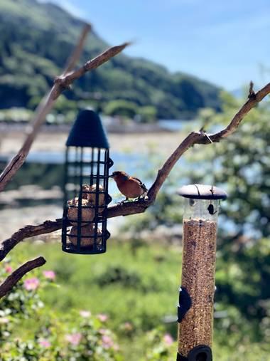 Miriamalafoto en Hamelin: Fauna  (Highland Council), Pajarito ♥️