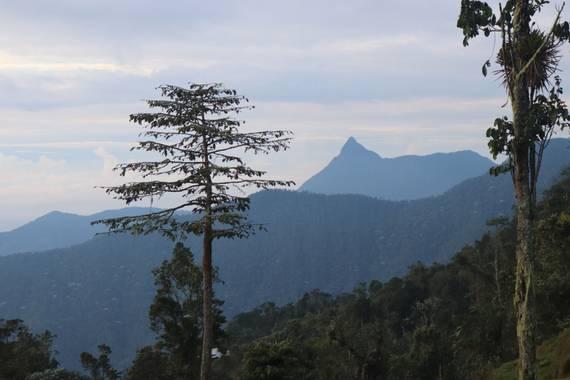 Juan Pablo Medina en Hamelin: Paisaje  (Cali), Vista de Pico de Loro (2800msnm) ubicado en El Topacio desde la Vereda Carpatos, zona rural de Cali, Colombi...