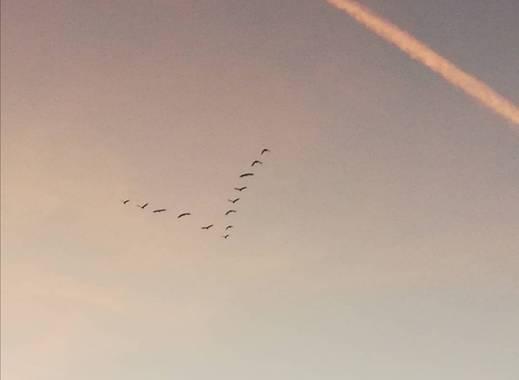 VickyOnTheRocks en Hamelin: Fauna  (Liria), #garzas #miscaminatas #V #aves #retirada #cielo #skylover #miratucielo