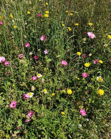 S.- en Hamelin: Flora  (Olocau), #ComposiciónDePrimavera #TalCual #Flores #SinFiltros #Primavera #SerieFlores #MiJardín #CercaDeMi #Hogar #Fotógrafa #Fotog...