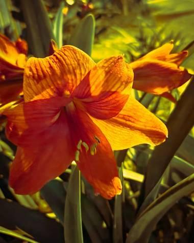 Jaiverlozano25 en Hamelin: Flora, Nocturna