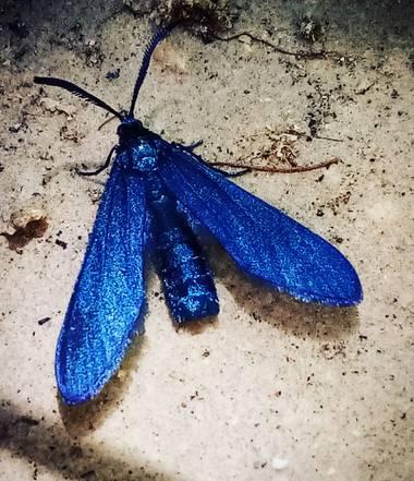 Navarroarevalomariateresa en Hamelin: Fauna  (Viesca), No tengo ni idea de cuál sea su nombre...pero su belleza es única!!