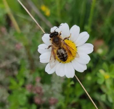 Paco  Requena en Hamelin: Flora  (Redueña), Cada uno hace su trabajo.....🤔🤔...#flora21