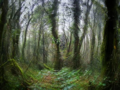 Mararuizasensio en Hamelin: Paisaje  (Tarifa), #niebla #tarifa #encinas #bosqueencantado #arboles #flora #huaweiphotography #p30pro #huaweiphotographers #l...