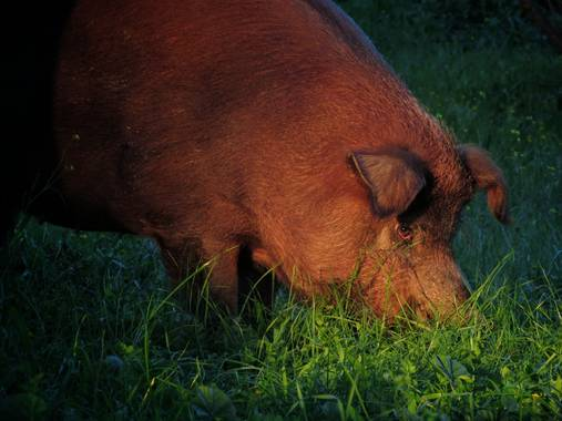 fabiola en Hamelin: Fauna  (Oliva de la Frontera), #invierno #campito #frioysol