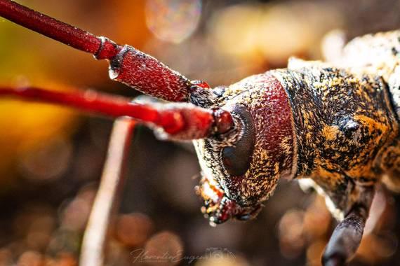 Florentinoeugenio en Hamelin: Fauna  (El Catllar), #bugs