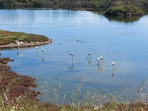 Apasnau75 en Hamelin: Fauna  (Málaga), Creo que son más blancos que rosa porque aún no son adultos...
