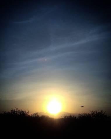 Navarroarevalomariateresa en Hamelin: Paisaje  (Viesca), Un ave despidiendo al día! Hermoso atardecer esta tarde!!#Invierno20