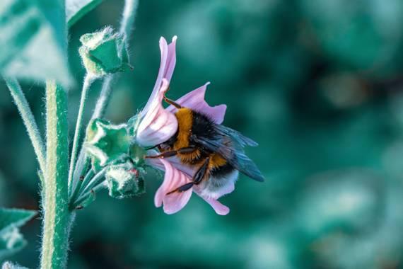 Vir en Hamelin: Flora  (Guecho), Como abejorro en flor! #flora2021  #flora21 #flores #flowers