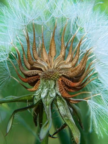 Capturolavida en Hamelin: Flora  (Palos de la Frontera), #nature