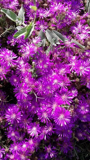 Solerantonio2 en Hamelin: Flora  (Almería), Flores en el parque de andarax almeria