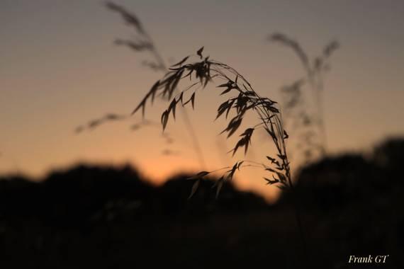 Frankgt48 en Hamelin: Paisaje  (Trescasas), #flores#paisajes