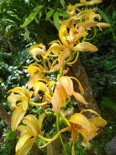 Amigomar197171 en Hamelin: Flora  (Cali), Aun siendo una familia cuyas flores tienen un aspecto muy diferente entre géneros, su estructura es homogénea. Co...
