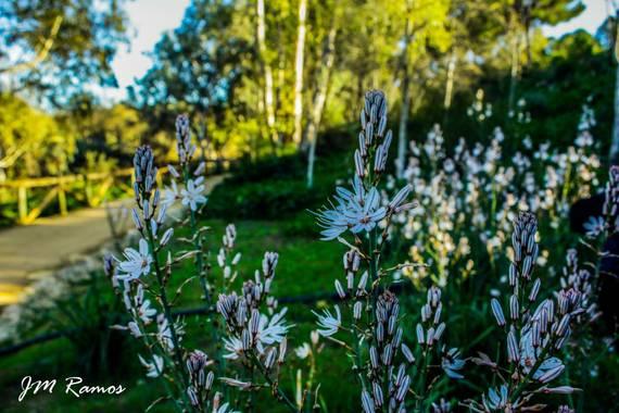 ramosbarbero.jm en Hamelin: Flora, #paisajesyjardines