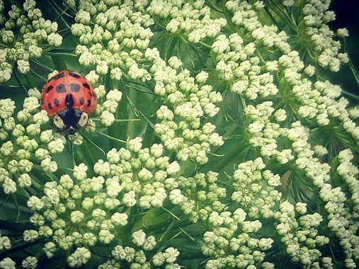 luckytulian en Hamelin: Fauna, #macrofoto2020