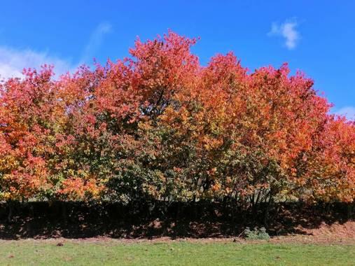 mariale en Hamelin: Paisaje, 📸 @marialendza #otoño20 #paisajes #marialemdza #Naturaleza #Montaña #BellezaNatural #otoño2020 #ProvinciaDeLeón #octubre2020...