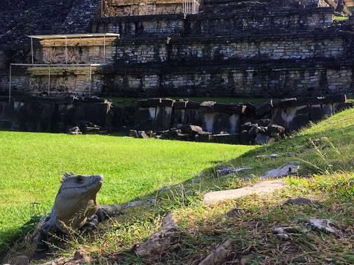 rafaelobregondorantes en Hamelin: Fauna  (Chiapas), Iguana...