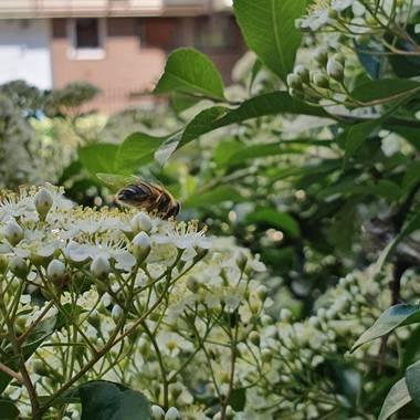 Safari.faby en Hamelin: Flora, #flor #abeja #paisaje #madrid #hamelin