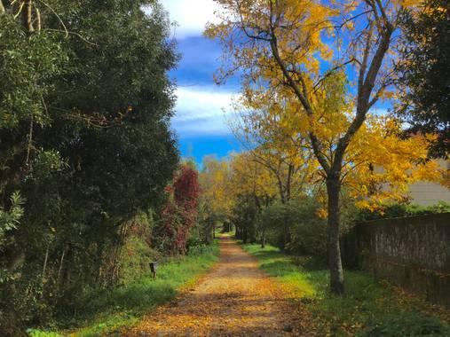 yolaidap en Hamelin: Paisaje  (Vigo), Los colores del otoño,Camino Río Lagares Vigo #hamelin2020