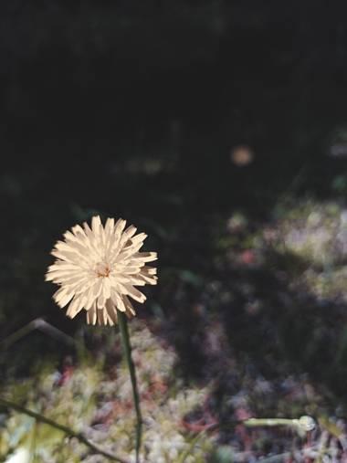 Tadeo_acin en Hamelin: Flora