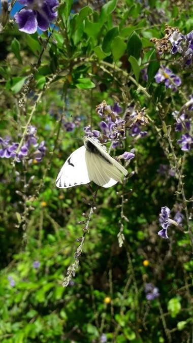 Sol714 en Hamelin: Flora, Una belleza nuestra naturaleza!!!