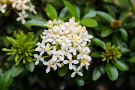 Amparo.lopez en Hamelin: Flora  (Cali), #flora21