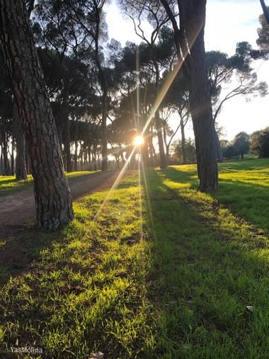 gyasmolina en Hamelin: Paisaje  (Madrid), Parque siete hermanas ✨🌲🍁  #verdequetequieroverde #rayosdesol #parquesyjardines #casadecampo #madridverde