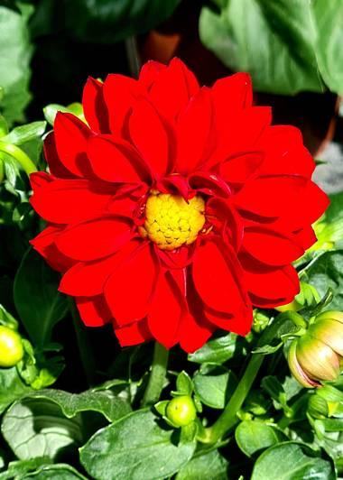 Lauratduch en Hamelin: Flora  (El Vendrell), Fotomovil
