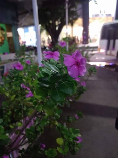 Sebastianlopezmunca13 en Hamelin: Flora