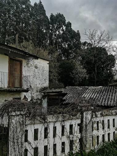 Susandresro en Hamelin: Paisaje  (Lugo), Eucalipto y casa abandonada.