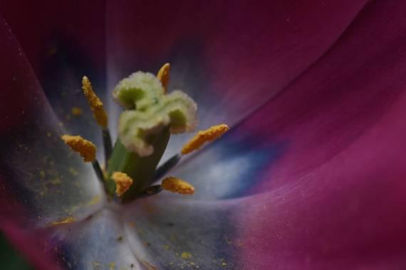 Claudiocarles en Hamelin: Flora  (Majadahonda), #flora21