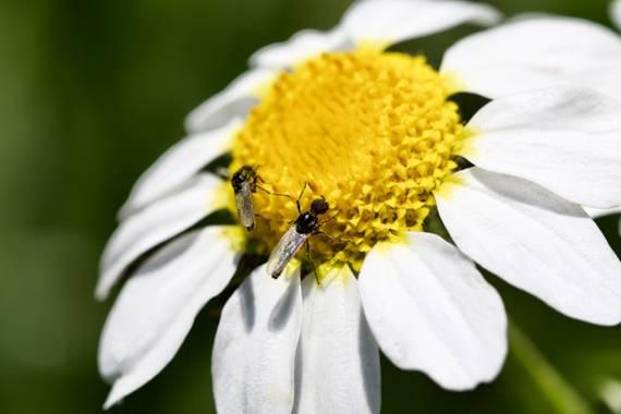 ralphlagarillo en Hamelin: Flora  (Spain), #flora21