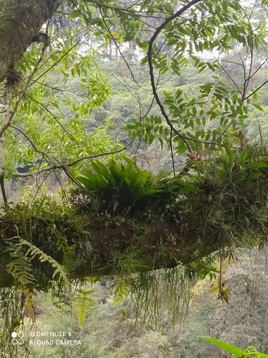 LuisSandoval en Hamelin: Flora  (Xico), Orquídea