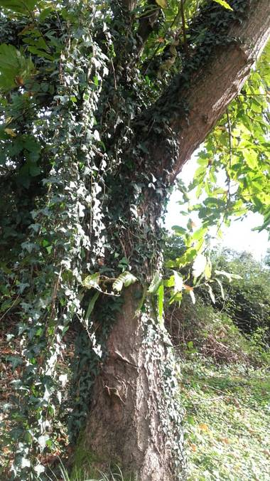 paulavr en Hamelin: Flora  (Marina de Cudeyo), #DiasDeOtoño2020