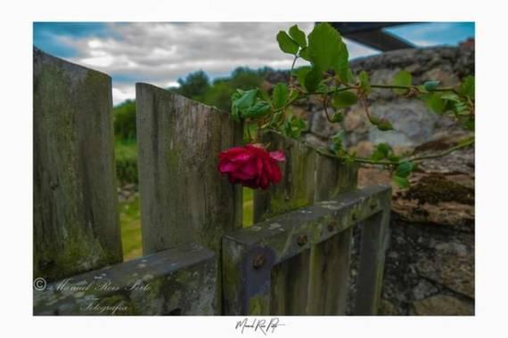 Manuropo39 en Hamelin: Flora  (Soba), #Flora21