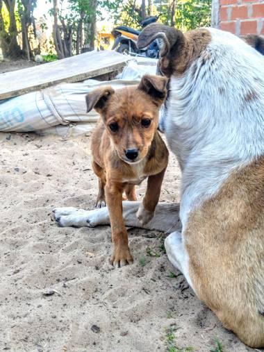 alejandrogeorgeos en Hamelin: Fauna  (Gobernador Castro), Cachorro mestizo junto a su madre
