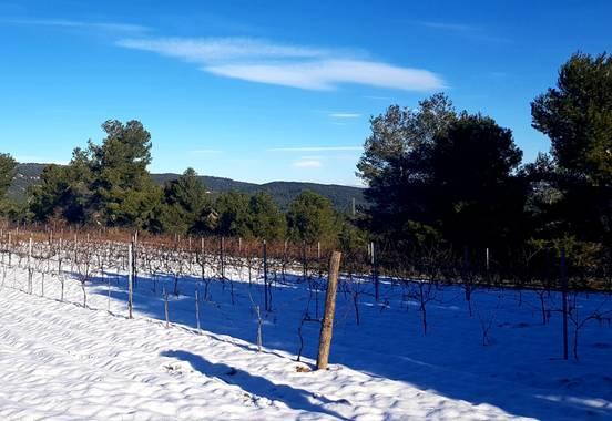 Agueda Animalista en Hamelin: Paisaje, Entre viñas 🍇 #AltPenedes #Invierno20