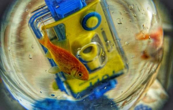 Manelsersol en Hamelin: Fauna  (Olot), #Naturaleza #peces #pecesdecolores #Fauna #Portrait #Retrato