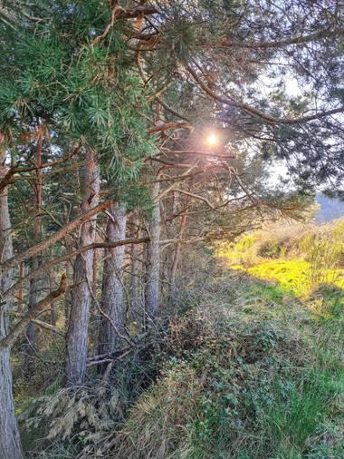 Marijohz en Hamelin: Paisaje  (Ezcaray), Luz y sombras del bosque