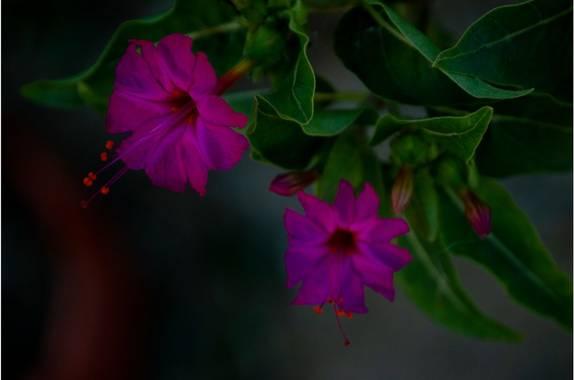 lycumart en Hamelin: Flora  (Playa), #florsilvestre #belleza #naturaleza