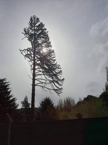 S.- en Hamelin: Flora  (Vilamarxant), El #árbol #peinado :) Entre #blancosynegros  #Viento #Fotografía2021 #Fotógrafa #flora21 #Árboles #Especiales #DeLado...