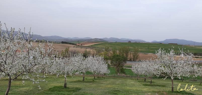 Lolita en Hamelin: Paisaje  (Alcalá la Real), #almendros en flor@ Alcala la Real