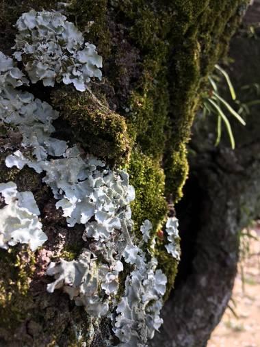 Mariel en Hamelin: Flora  (Japan), Trocos vivos