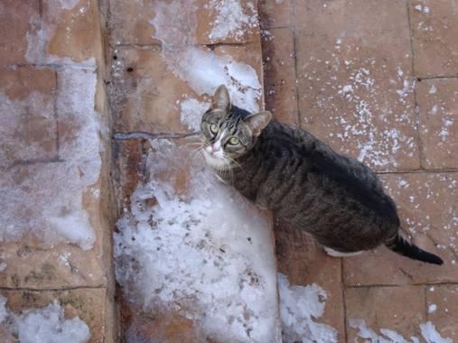 Anaortega2010 en Hamelin: Fauna  (Las Rozas de Madrid), #gatocomun  #gatodomestico  #invierno20