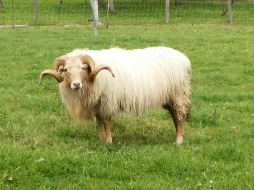 Iratxeharry en Hamelin: Fauna  (Gorliz), Con la mirada fija....