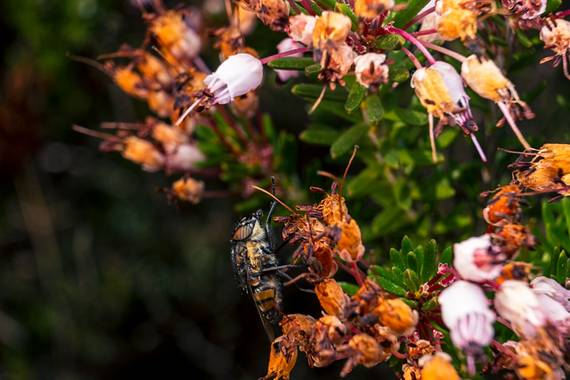 Roberto Núñez  en Hamelin: Fauna, #insectos #nature #insect #insects #naturaleza #bugs #macro #insectphotography #insecto #bug #macrophotography #wildlife...