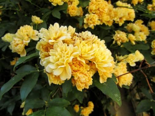 Mivilor68 en Hamelin: Flora  (Priaranza del Bierzo), #flora21